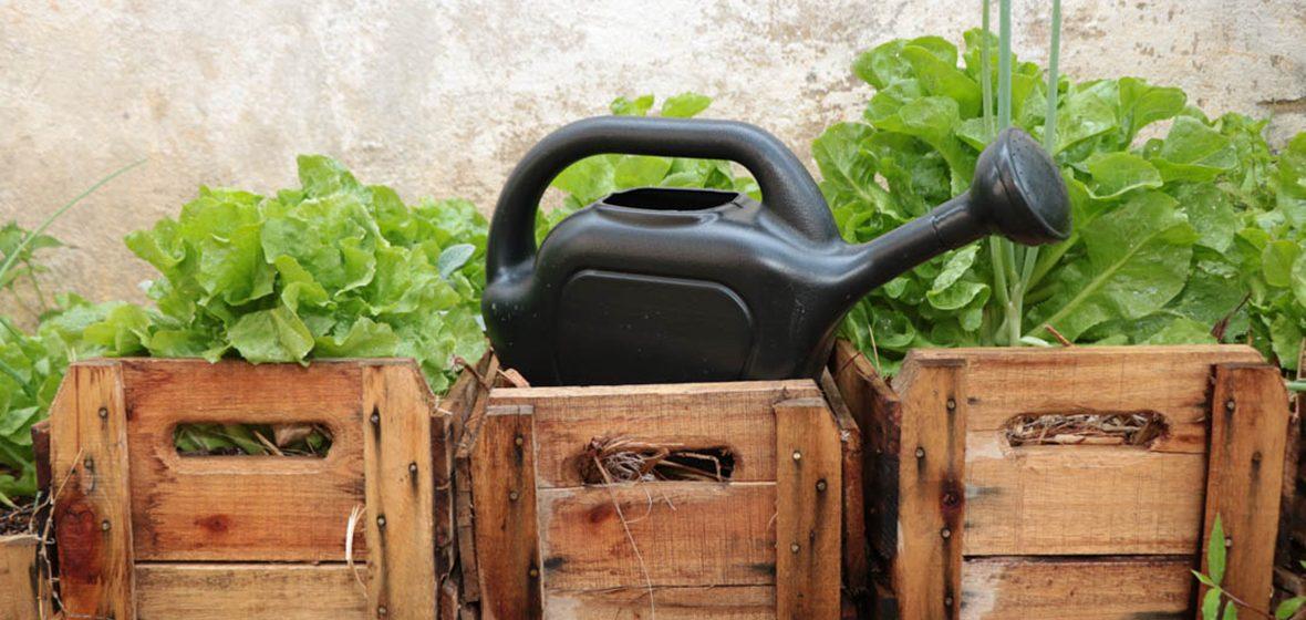 Hortas Agroecológicas